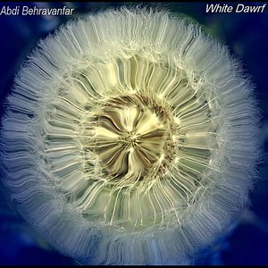 Image for 'Kootooleh Sefid (White Dwarf)'