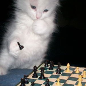 Image for 'Monday Chess'