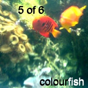 Image for 'Colourfish'