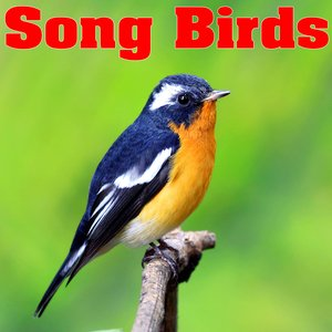 Image for 'Relaxed Chattering Birdsong Sound Effects'