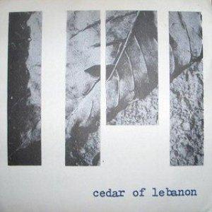 Image for 'Cedar of Lebanon'