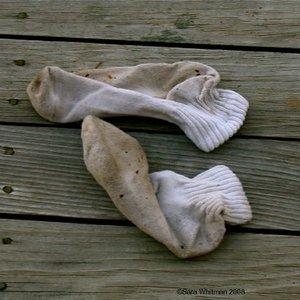 Immagine per 'old dirty socks.'