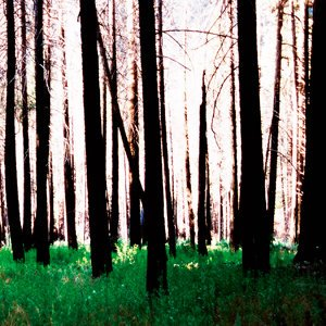 Image for 'Inside The Trees + Driftwood'