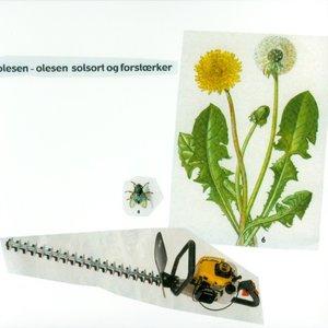 Imagen de 'Solsort Og Forstærker'