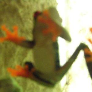 Bild för 'mr swim'