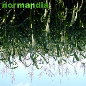 Image for 'normandia'