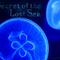 The Secret of the Lost Sea