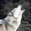 Avatar for warwolvescurse