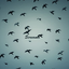 Avatar for birdstateofsoul