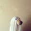 Avatar for ghostoflaika