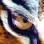 Avatar de tigerfenix
