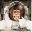 Avatar for SpaceMonkey30