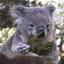 Avatar for Policekoala