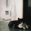 Avatar de blackcat1980