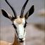 Avatar for gazellinda