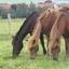 Avatar de pferde