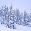 Avatar de winterfrost78
