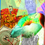 Darmowe mp3 do ściągnięcia - Dj Pepo Tytuł -   January Mix 2014 (Esta Con todo;).mp3