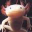 Avatar for the-axolotl