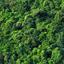 Avatar for Greengee