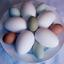 Avatar for Egg21