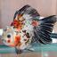 Avatar for Goldfish1000