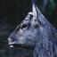Avatar for MrSaturn-