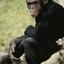 Avatar for biggus_chimpus