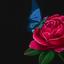 Avatar for rosepetals1984