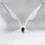 Avatar de Northern_Bird