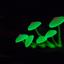 Avatar for Mushroom_Dealer