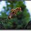 Avatar for cicada-
