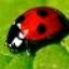 Avatar for black-ladybird