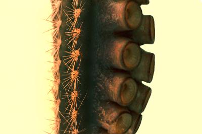 c4ctopus