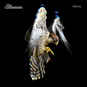 album Falcon by The Courteeners