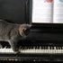 Soft Jazz Piano