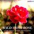 Wild Irish Rose - A Collection of Romantic Irish Favourites
