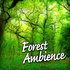 Forest Ambience (Nature Sounds only)