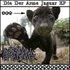 Die Der Arme Jaguar EP