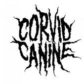 Corvid Canine