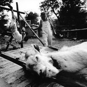 ""\""""Othar Turner and friend Abron Jackson clean three goats they've killed early in the morning before a picnic""""""170|170|?|en|2|6d44c0236eaffeeee12e9bc6086a57d5|False|UNLIKELY|0.3135731816291809