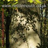 Nettlemouth