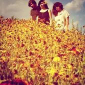 The Stargazer Lilies