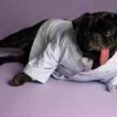 Best Dressed Dog