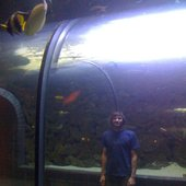 Dallas Aquarium, Fishsticks...