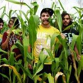 wwol Corn.