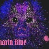 Tamarin Blue