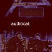 Audiocat