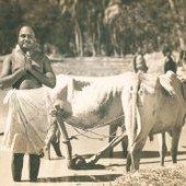 M. M. Dhandapani Desikar