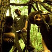 Tree Dusk Muir